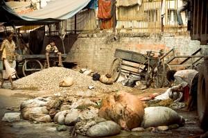 Animal waste on road