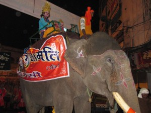 elephants were also there